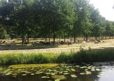 Borgerswold, omgeving Arte dell'anima